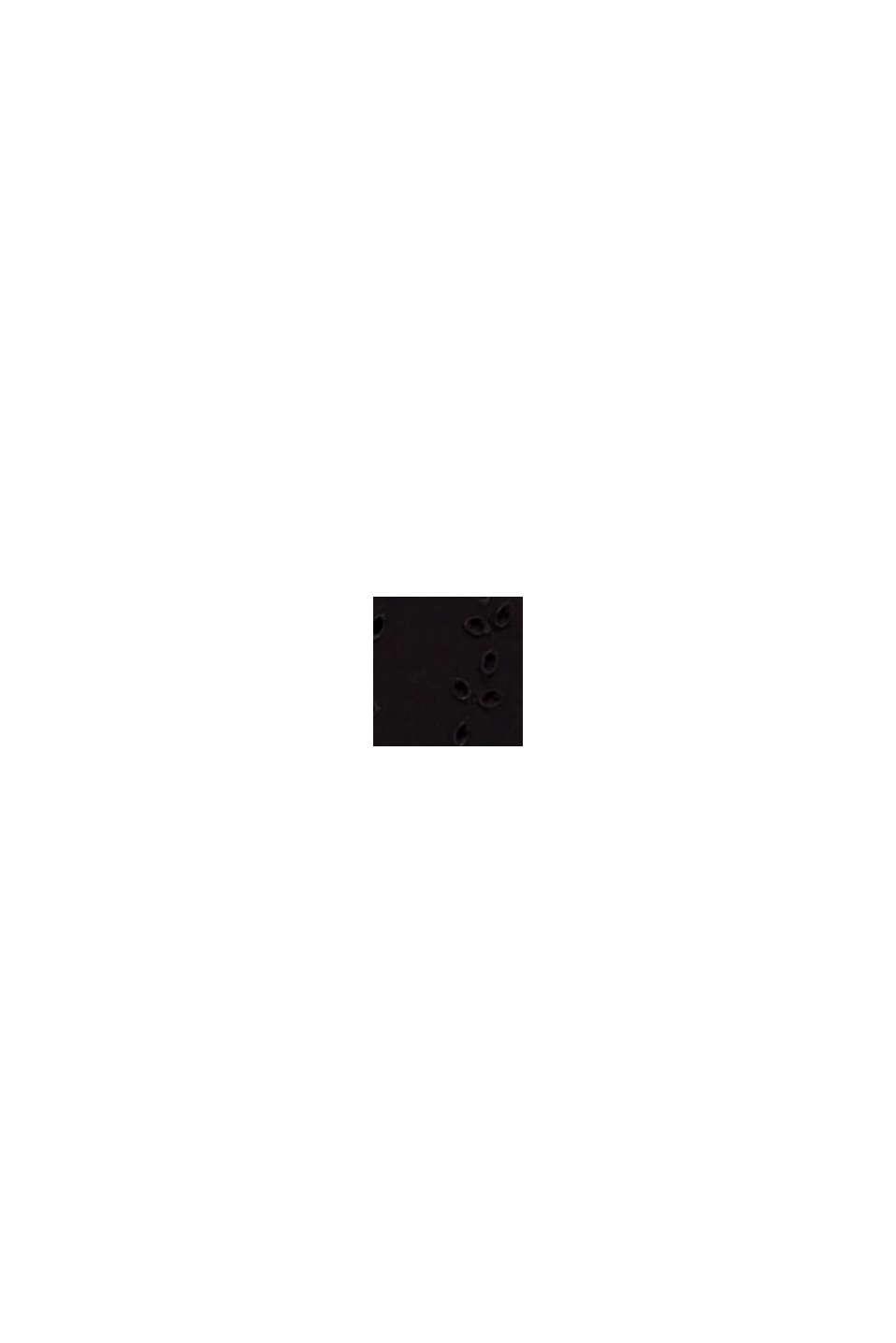 Blusentop mit Stickerei, BLACK, swatch
